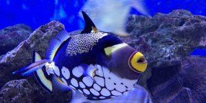 Aquarium près de la pointe aux piments (ile maurice)