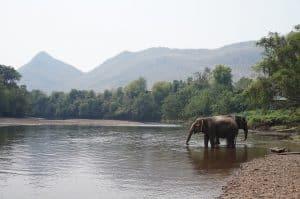 elephant thailandais pres d'un lac