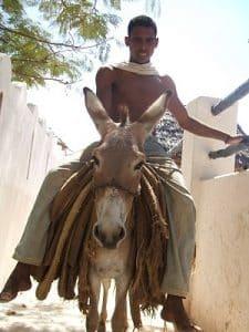 L'île écolo de Lamu