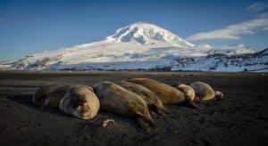 Les phoques en voie d'exctinction sur les îles Heard and MacDonalds