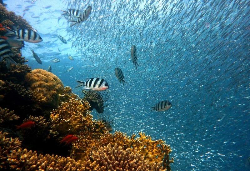 Richesse des fonds marins de l'océan Indien disponibles sur l'île Mafia, en Tanzanie.