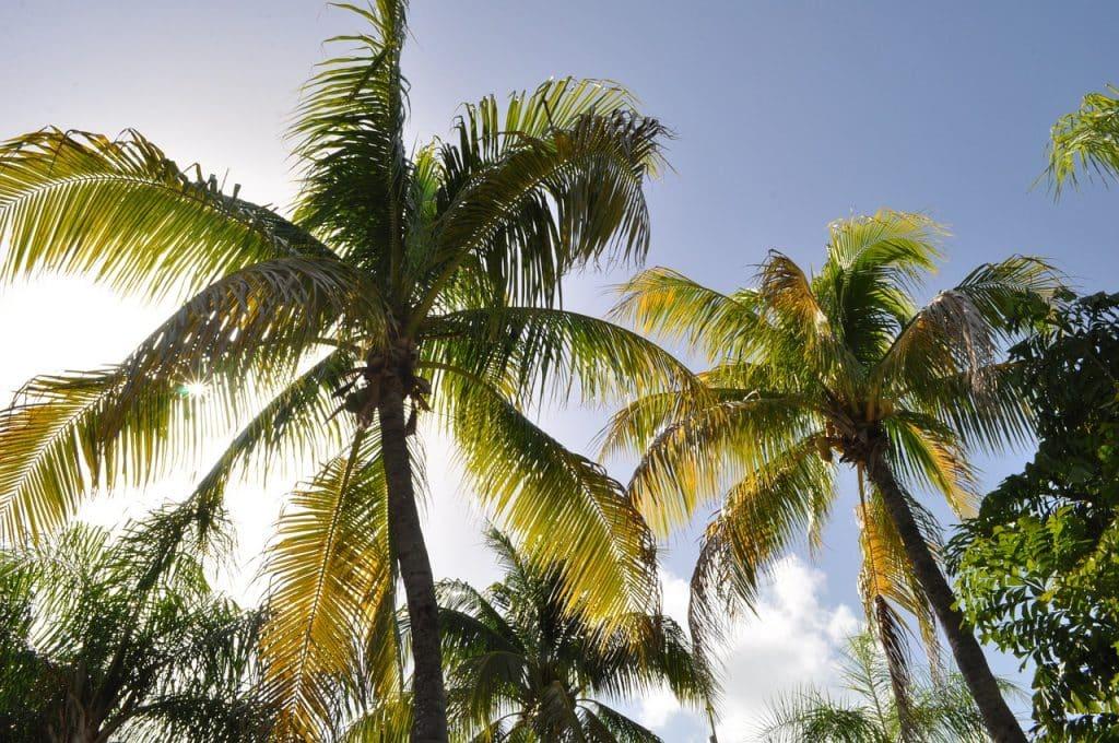 Vivez un concentré de bonheur pendant votre séjour en Guadeloupe